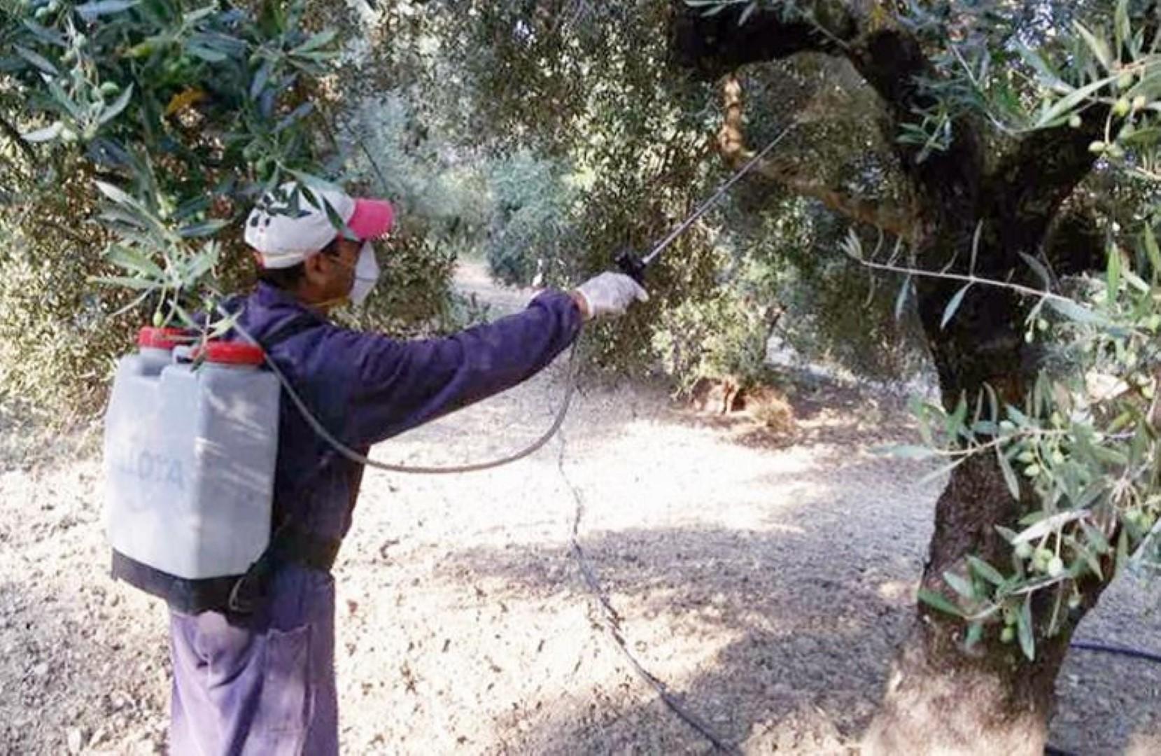 2ος ψεκασμός συλλογικής καταπολέμησης του δάκου της ελιάς | Δήμος Σουλίου